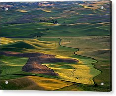 Palouse Shadows Acrylic Print by Mike  Dawson