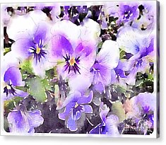 Pansies Watercolor Acrylic Print by John Edwards