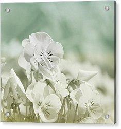 Pansy Flowers Acrylic Print by Kim Hojnacki