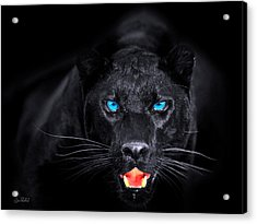 Panther Acrylic Print by Jean raphael Fischer
