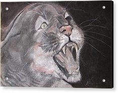 Panther Acrylic Print by Rebecca Wiltfong Frisbee