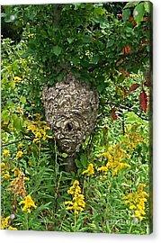 Paper Hornet Nest Acrylic Print by Garren Zanker