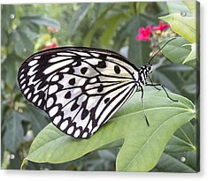 Paper Kite Butterfly Acrylic Print by Diane Wood