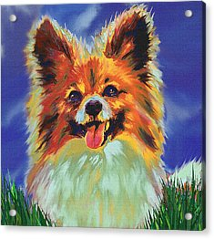 Papillion Puppy Acrylic Print by Jane Schnetlage