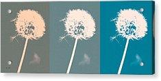 Parachute Balls Acrylic Print by Bob Orsillo
