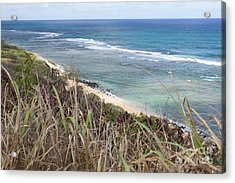 Paradise Overlook Acrylic Print by Suzanne Luft