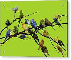 Parakeet Paradise Acrylic Print by DiDi Higginbotham