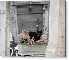 Paris Cemetery Cat - Le Chats Noir - Pere Lachaise - Black Cat On Grave Cemetery Art Acrylic Print by Kathy Fornal