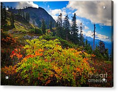 Park Butte Fall Color Acrylic Print by Inge Johnsson