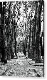 Park Path Acrylic Print by John Rizzuto