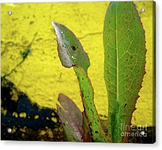 Parking Lot Weed Acrylic Print by CML Brown