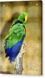 Parrot Acrylic Print by George Atsametakis