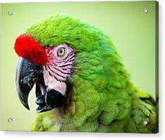 Parrot Acrylic Print by Sebastian Musial