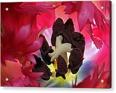 Parrot Tulip Swirl  Acrylic Print by Juergen Roth