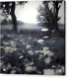 Parting Of The Trees Acrylic Print by Gothicolors Donna