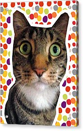 Party Animal- Cat With Confetti Acrylic Print by Linda Woods