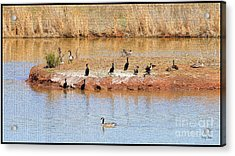 Party Island Acrylic Print by Betty LaRue