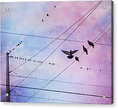 Party Line Acrylic Print by Amy Tyler