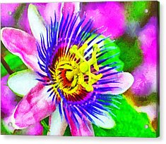 Passiflora Edulis Otherwise Known As Passion Flower Acrylic Print by Digital Photographic Arts