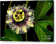 Passion Flower Acrylic Print by James Temple