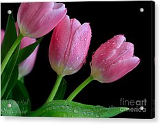 Passion For Pink Acrylic Print by Tracy  Hall