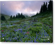 Aster Acrylic Print featuring the photograph Pastel Mountain Dawn by Mike Dawson