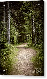 Path In Old Forest Acrylic Print by Elena Elisseeva