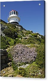 Path Leading To Lighthouse At Cape Point Acrylic Print by Sami Sarkis