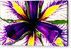 Patricia Bunk's Iris  Acrylic Print by Patricia Bunk