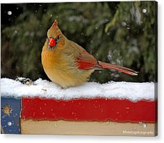 Patriotic Cardinal Acrylic Print by Mary Williamson