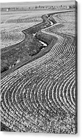 Patterns 1 Acrylic Print by Don Hall