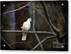Peace Be With You Acrylic Print by Cris Hayes