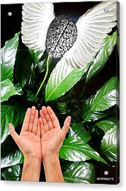 Peace Lily For The Consciousness Acrylic Print by Paulo Zerbato