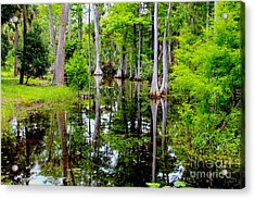 Peaceful Lake Acrylic Print by Carey Chen