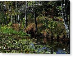 Peaceful Pond Acrylic Print by Karol Livote