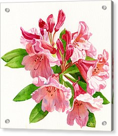 Peach And Pink Rhododendron Acrylic Print by Sharon Freeman