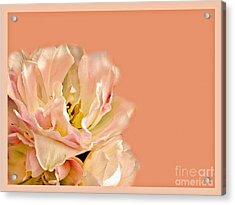 Peach Rose Acrylic Print by Carol F Austin