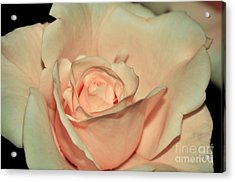 Peaches And Cream Acrylic Print by Kaye Menner