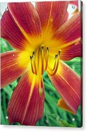 Peachy Acrylic Print by Mike Podhorzer