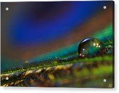 Peacock Drop Acrylic Print by Lisa Knechtel