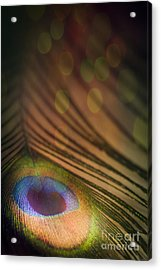 Peacock Party Acrylic Print by Jan Bickerton