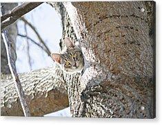 Peaking Cat Acrylic Print by Sharon Popek