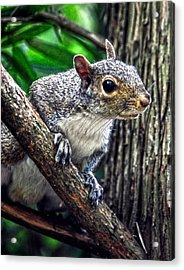 Peanut? Treat? Acrylic Print by Sandi OReilly