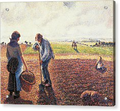 Peasants In The Field Eragny Acrylic Print by Camille Pissarro