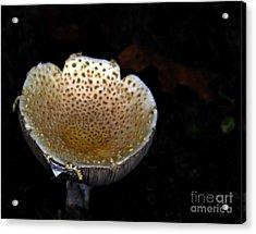 Pee Cup Acrylic Print by Steven  Digman
