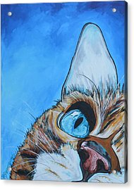 Peek A Boo Acrylic Print by Patti Schermerhorn