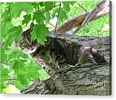 Fanciful Cat Acrylic Print featuring the photograph Peek-a-boo by PhotoClique