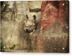 Peek A Boo Rhino Acrylic Print by Thomas Woolworth