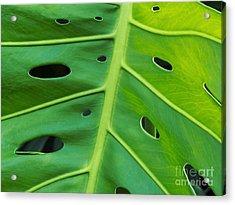 Peekaboo Leaf Acrylic Print by Ann Horn