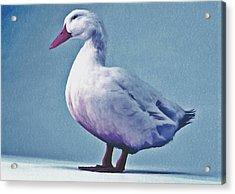 Pekin Ducks 2 Acrylic Print by Lanjee Chee